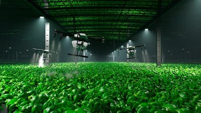 Animation with drones spraying health plant products on a plantation at night.