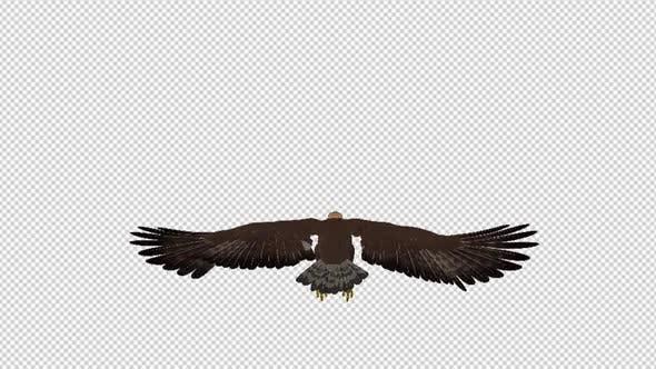 Golden Eagle - 4K Flying Loop - Back View