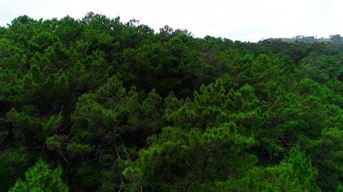 Above Wild Jungle