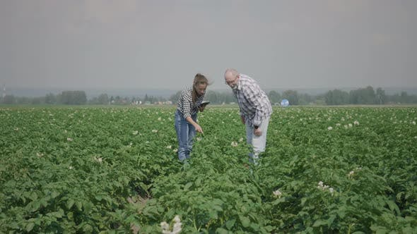 Thumbnail for Two farmers in a potato field