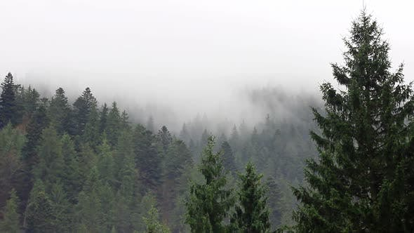 Fog in Mystery Forest