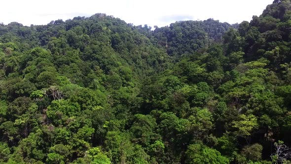 Virgin Unspoiled Caribbean Tropical Corcovado Rain Forest