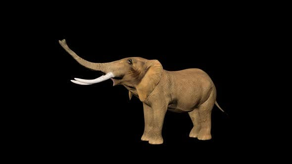 Circus Elephant Call