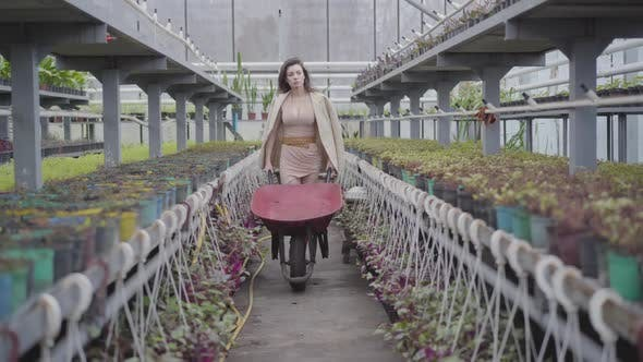 Thumbnail for Beautiful Caucasian Brunette Woman in Elegant Beige Dress and Jacket Pulling Cart in Greenhouse