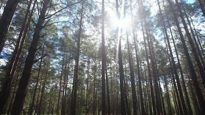 Sun Shining Through The Tree Branches