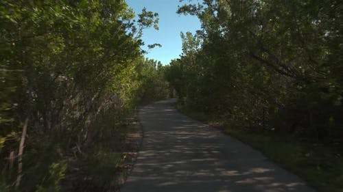 Nature bike path through the woods