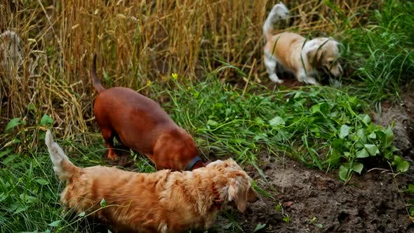 Funny dogs on field.
