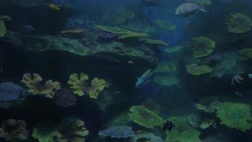 Fish swimming in oceanarium