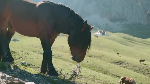 Thumbnail for Horse Grazing In Spanish Mountains