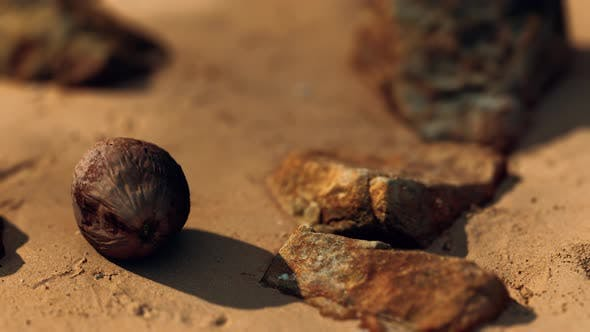 Coconut on Sand Beach at Sunset