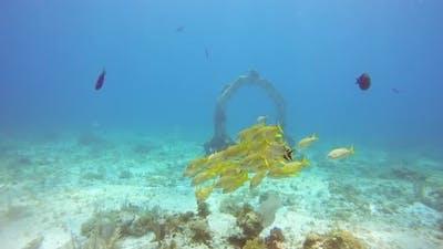 Diving in Cancun