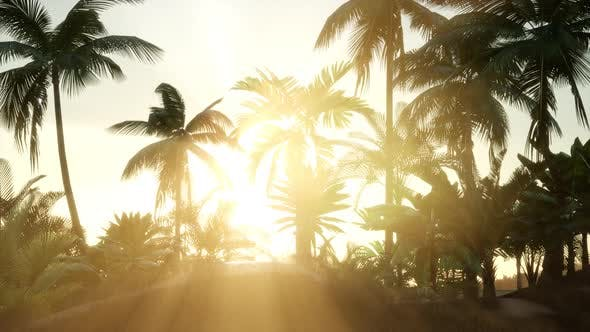 Thumbnail for Silhouette Coconut Palm Trees at Sunset