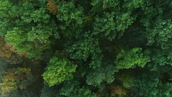 Aerial Forest View Nature Renewal Late Summer