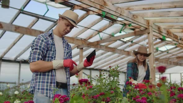 Thumbnail for Colleagues Florists Work Together with Tablet Computers in a Rose-growing Greenhouse. Small Business