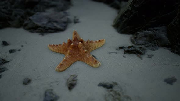 Starfish on Sandy Beach at Sunset