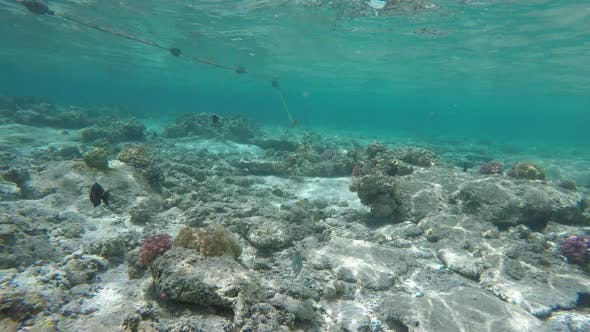 Thumbnail for Wonderful and Beautiful Underwater World with Corals and Tropical Fish.
