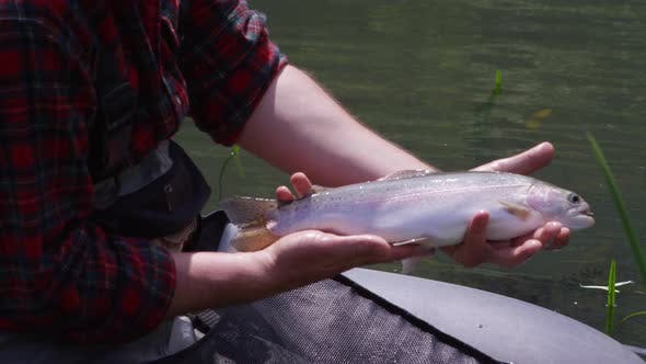 Fly fisherman holding rainbow trout