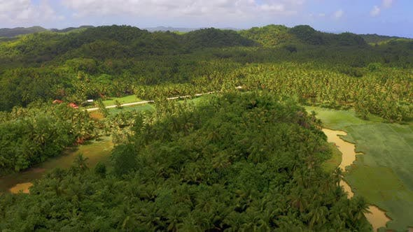 Cover Image for Aerial View of Palms Forest, Road and Mountain on the Siargao Island, Philippines