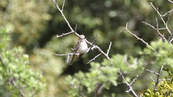 Thumbnail for Bird flies away at Cèdre Gouraud Forest