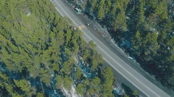 Thumbnail for Dense Evergreen Pine Trees Surround Asphalt Road in Spring