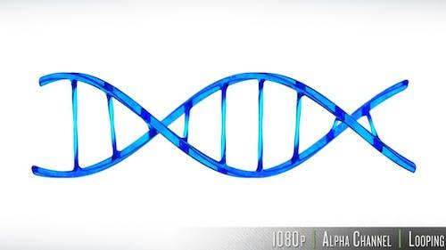 DNA Double Helix Strand Loop