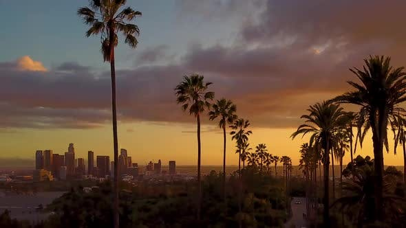 Aerial Of Palm Trees And The Sunset