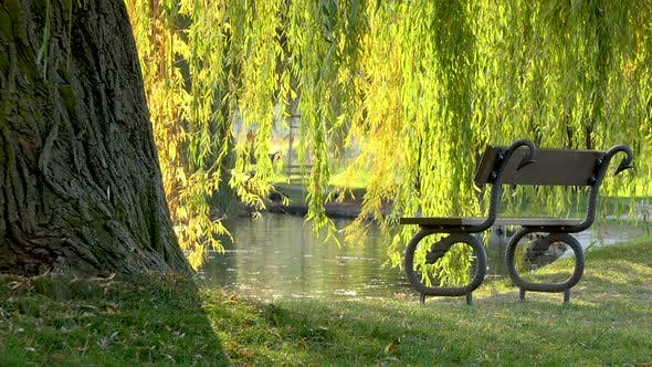 Thumbnail for A Bench By a Pond Under a Willow in a Park on a Sunny Day - Slider
