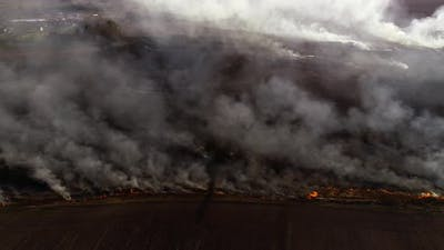 Dry Lanes and Grass on Swamp in Fire, Ecology Disaster