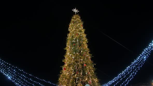 Thumbnail for Christmas Tree On City Square