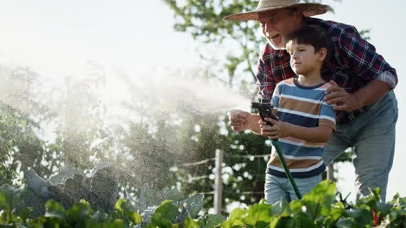 Thumbnail for Video of grandson helping grandfather to water the vegetable patch