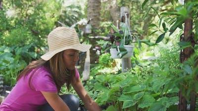 Woman gardening in a botanical garden