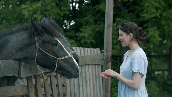 Thumbnail for Young Smiling Woman Feeding Horses in Paddock Outdoors