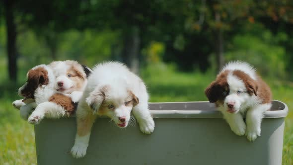 Thumbnail for Funny Puppies Escape From the Basket