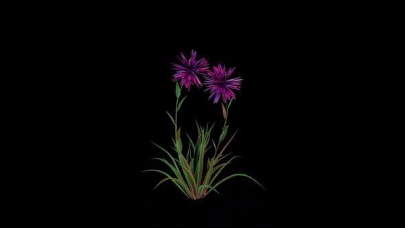 Fleurs en croissance