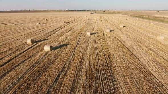 Thumbnail for Aerial Shot of a Horizonless Wheat Field with Large Rolls of Straw in Summer