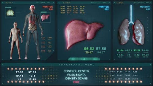 Liver Lungs and Male Brains in Futuristic x Ray Scan