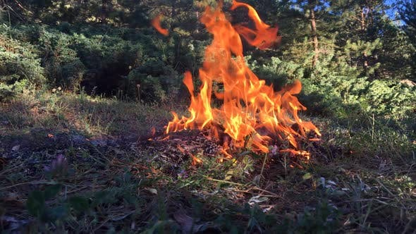 Thumbnail for Forest Fire