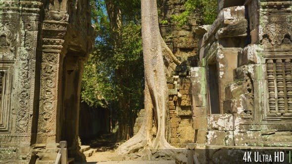 Thumbnail for 4K Ta Prohm Khmer Temple with Overgrown Tree Roots, Angkor, Cambodia