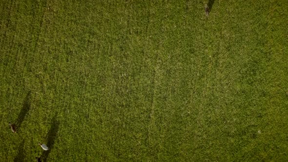 Thumbnail for Aerial view of goats grazing in field on farmland in Greece.