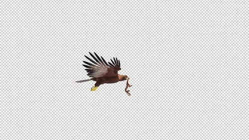 Golden Eagle With Snake - Flying Loop - Side View