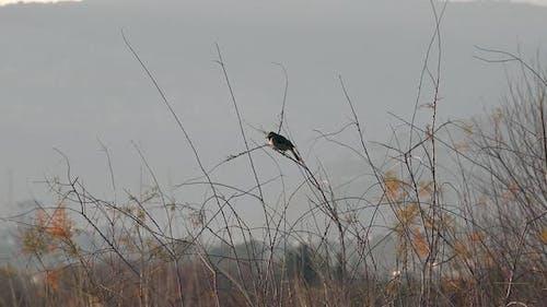 One Black Bird in Thicket