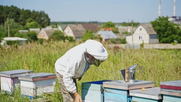 Thumbnail for Apiary in the countryside