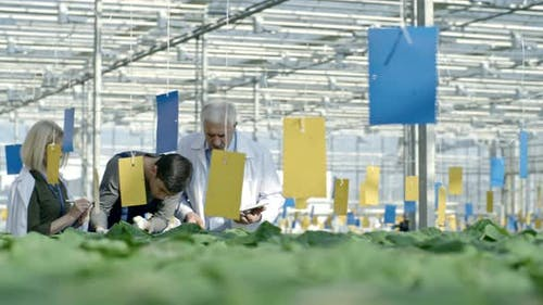 Busy Agronomists and Greenhouse Worker