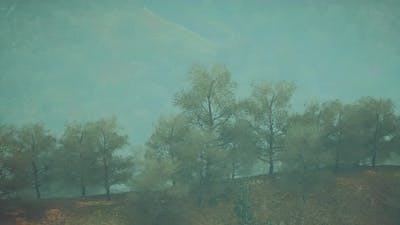Small Green Trees on Hills in Fog
