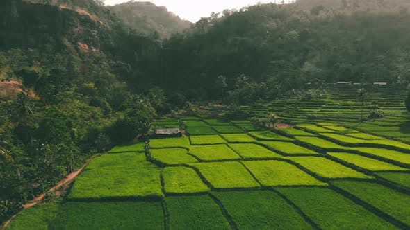 Beautiful aerial view of hills with rice field terrace and waterfall in the morning