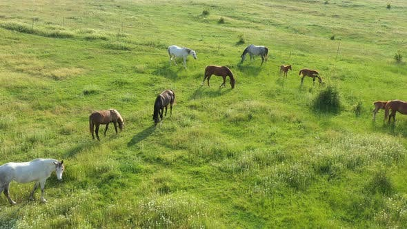 Thumbnail for Aerial View Of Horses