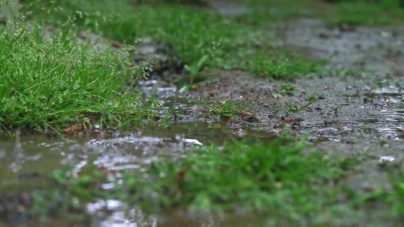 Thumbnail for Rain (Slow Motion)