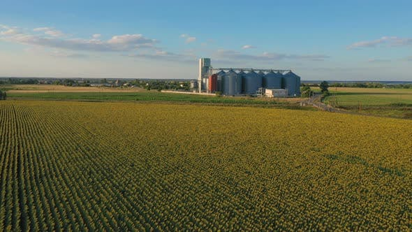 Thumbnail for Modern Grain Silos At The Field Of Blooming Sunflowers