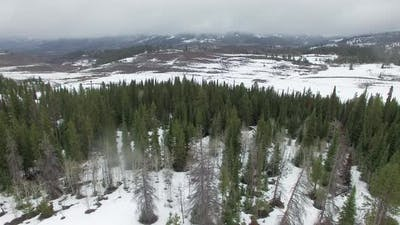 Flying view over snow and pine trees