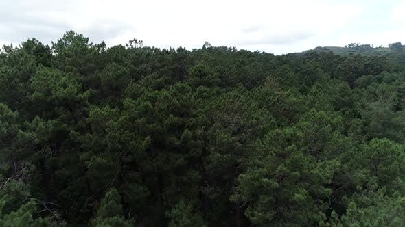 Thumbnail for Forest Aerial View
